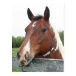 Retrato del caballo tarjeta postal