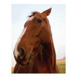 Retrato del caballo tarjeta publicitaria