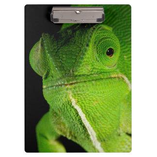 Retrato del camaleón Aleta-Necked