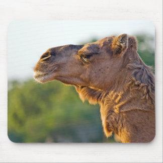 Retrato del camello mousepads