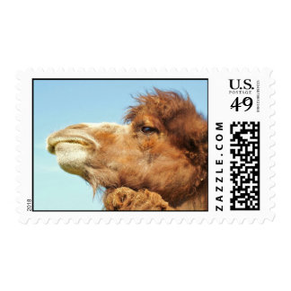 Retrato del camello - sello
