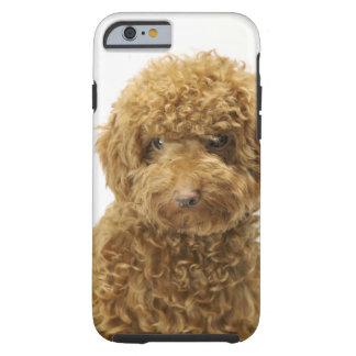 Retrato del caniche de juguete funda de iPhone 6 tough
