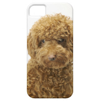 Retrato del caniche de juguete funda para iPhone 5 barely there