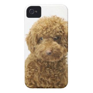 Retrato del caniche de juguete iPhone 4 Case-Mate protectores