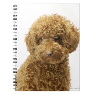 Retrato del caniche de juguete libros de apuntes
