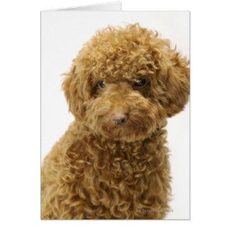 Retrato del caniche de juguete tarjeta de felicitación