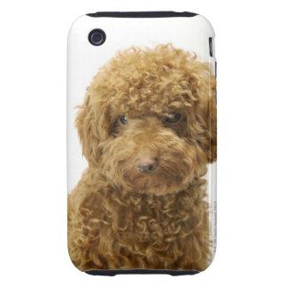Retrato del caniche de juguete tough iPhone 3 protectores
