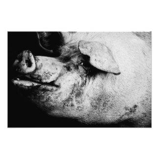 retrato del cerdo cojinete