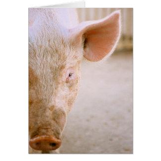 Retrato del cerdo tarjeta de felicitación