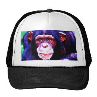 Retrato del chimpancé gorro