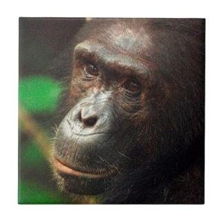 Retrato del chimpancé (trogloditas de la cacerola) tejas  ceramicas
