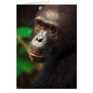 Retrato del chimpancé (trogloditas de la cacerola) tarjeta de felicitación