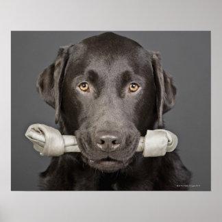 Retrato del chocolate Labrador Impresiones