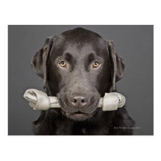 Retrato del chocolate Labrador Tarjetas Postales