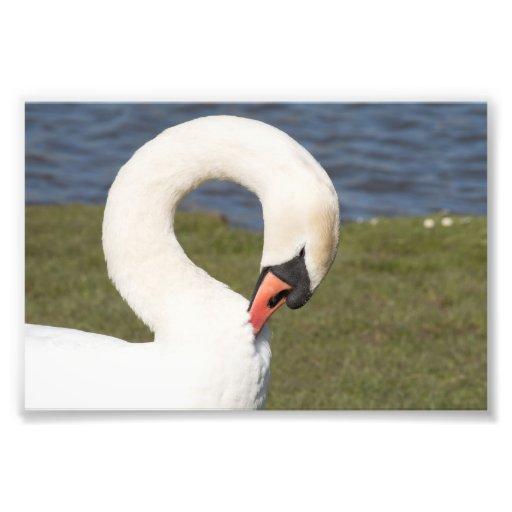 Retrato del cisne mudo arte fotografico