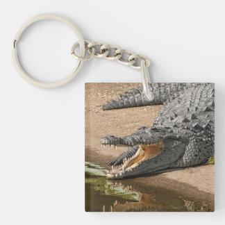 Retrato del cocodrilo con la boca abierta de par llavero cuadrado acrílico a doble cara