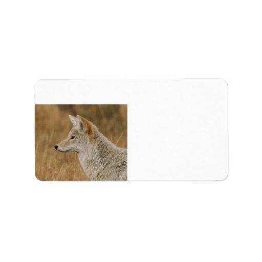 Retrato del coyote etiqueta de dirección