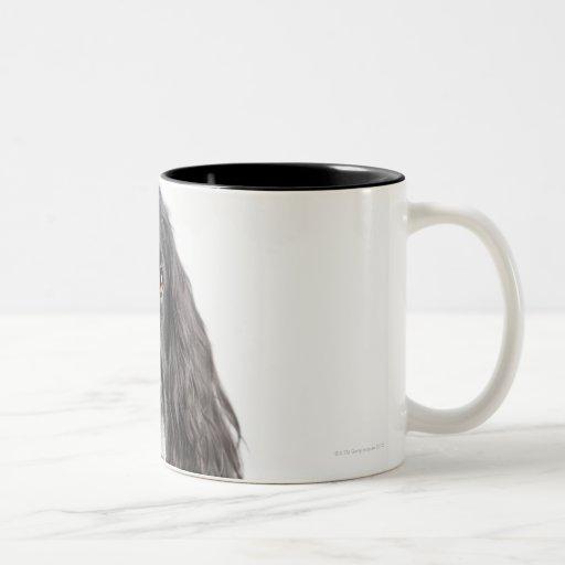 Retrato del estudio de cocker spaniel taza de café