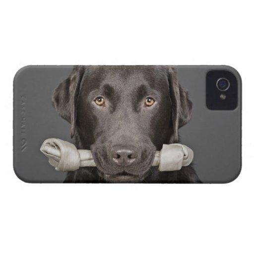 Retrato del estudio de llevar de Labrador del choc Case-Mate iPhone 4 Cárcasas