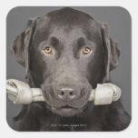 Retrato del estudio de llevar de Labrador del choc Colcomanias Cuadradas
