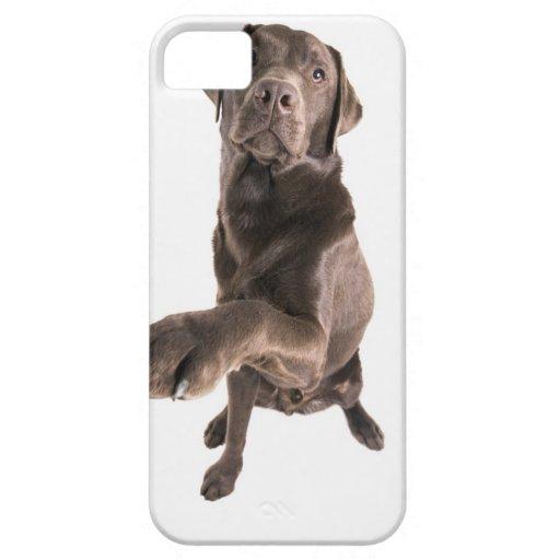 Retrato del estudio del chocolate Labrador iPhone 5 Case-Mate Coberturas