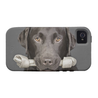 Retrato del estudio del chocolate Labrador Case-Mate iPhone 4 Carcasa