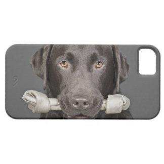 Retrato del estudio del chocolate Labrador Funda Para iPhone SE/5/5s