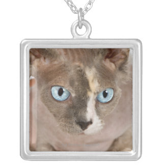 Retrato del estudio del gato de Sphynx Colgante Cuadrado