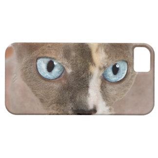Retrato del estudio del gato de Sphynx iPhone 5 Fundas