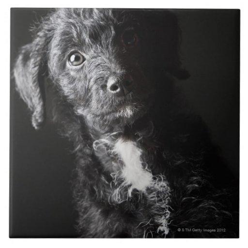 Retrato del estudio del Jack-uno-doodle negro Azulejos Ceramicos