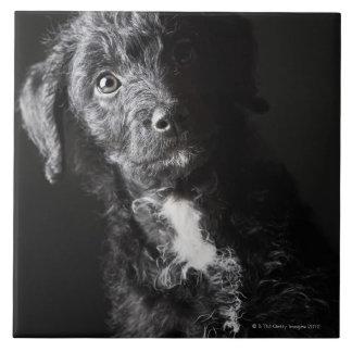 Retrato del estudio del Jack-uno-doodle negro Azulejo Cuadrado Grande