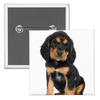 Retrato del estudio del perrito de Rottweiler Pin Cuadrado