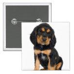Retrato del estudio del perrito de Rottweiler Pins