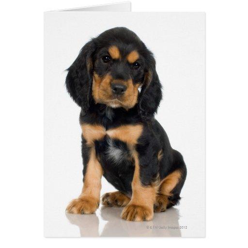 Retrato del estudio del perrito de Rottweiler Tarjeton