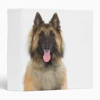 "Retrato del estudio del perro de pastor belga carpeta 1 1/2"""