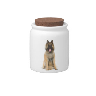 Retrato del estudio del perro de pastor belga jarra para caramelo