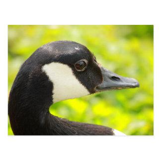 retrato del ganso postal