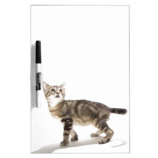 Retrato del gatito blanco que mira para arriba pizarra