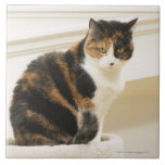 Retrato del gato 2 teja  ceramica
