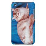 Retrato del gato 3 funda iPod