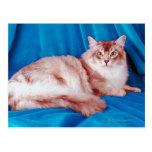 Retrato del gato 3 postales