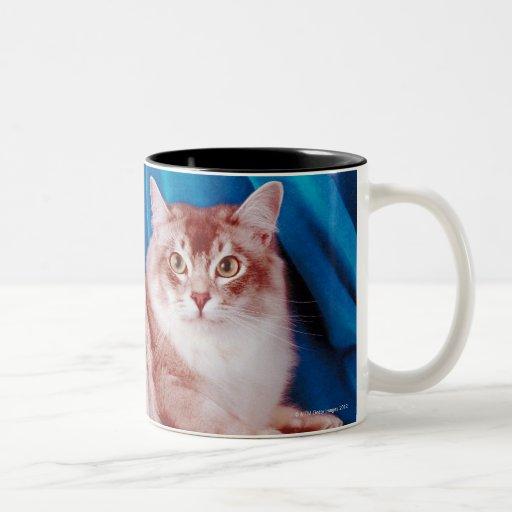 Retrato del gato 3 taza de dos tonos