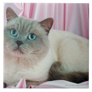 Retrato del gato 4 tejas  ceramicas