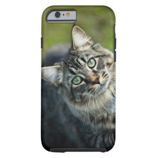 Retrato del gato al aire libre funda de iPhone 6 tough
