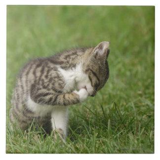 Retrato del gato azulejo cuadrado grande