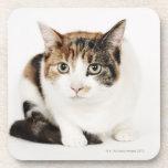 Retrato del gato de calicó posavasos de bebida