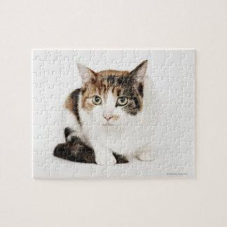 Retrato del gato de calicó puzzle