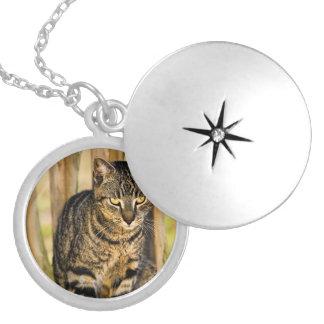 Retrato del gato de la concha, foto del animal del collar plateado