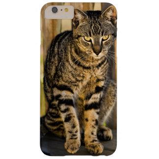 Retrato del gato de la concha, foto del animal del funda para iPhone 6 plus barely there