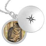 Retrato del gato de la concha, foto del animal del medallón